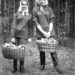 Полно грибов в лесу!